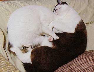 猫団子の悩み03