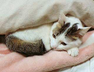猫団子の悩み06