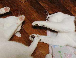 猫団子の悩み07