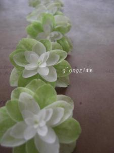 CIMG6062.jpg