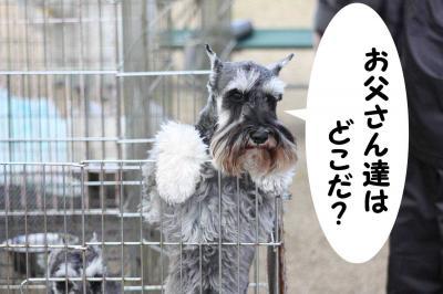 081129徳島ドッグショー32-s