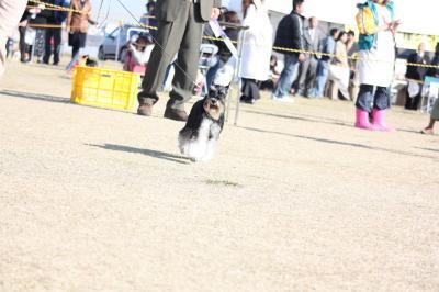 081129徳島ドッグショー24-s