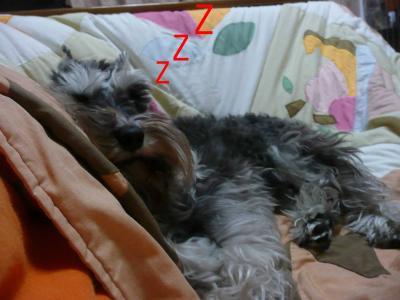 ダイアンコタツで寝る2