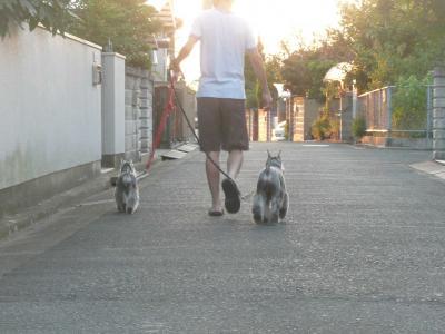 夕方の散歩4