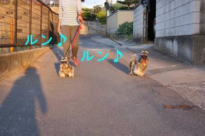 GOダイアン散歩2-s