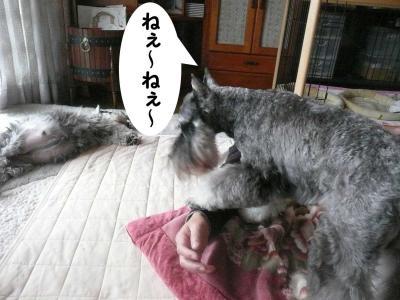 GO君2009.10.11.1-s