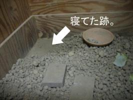 IMG_moji5009.jpg