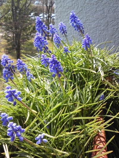春が来た3