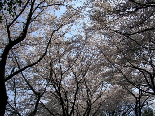'10桜5