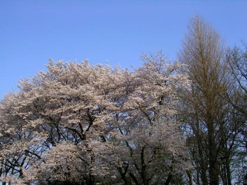 '10桜9