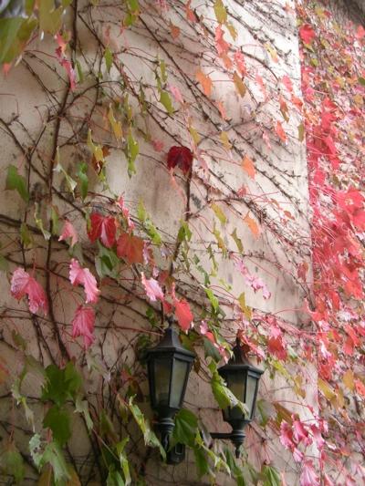 郷の秋10