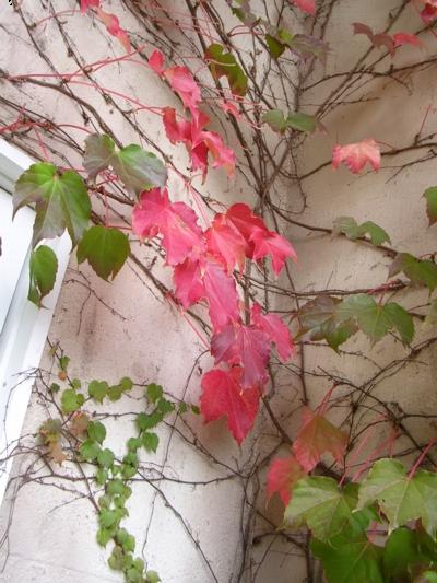 郷の秋11