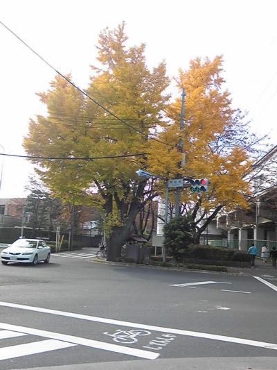 ご近所の秋2