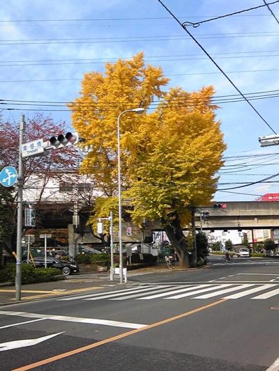 ご近所の秋3