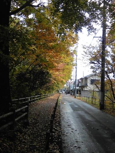 ご近所の秋4