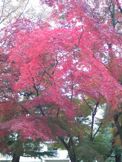 ご近所の秋8