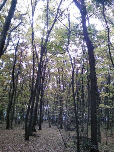 ご近所の秋9