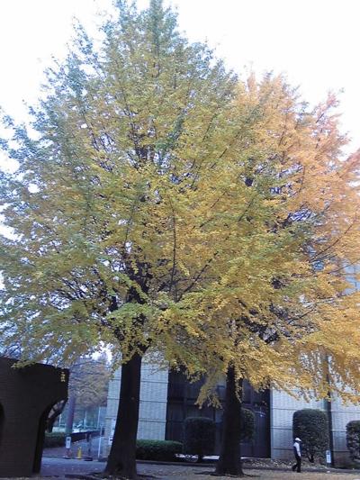 ご近所の秋10