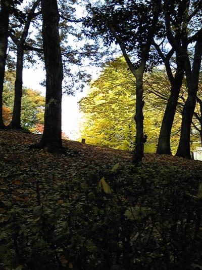 ご近所の秋11