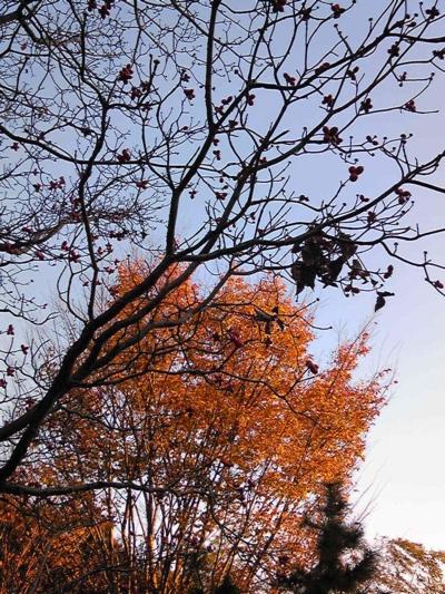 ご近所の秋13