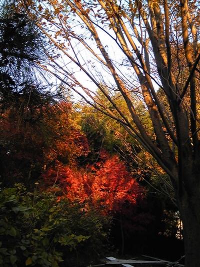ご近所の秋14