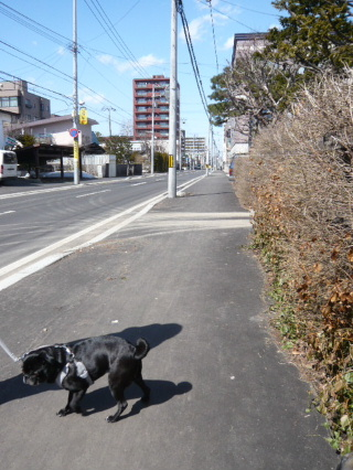2010_0402chimaki0011b.jpg