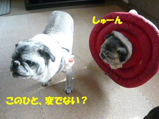 2010_0412kinoko0006b.jpg