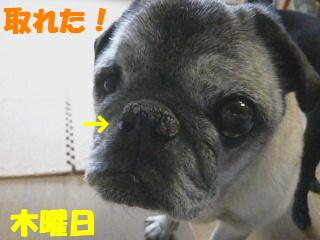 2010_0603onegai0009b.jpg