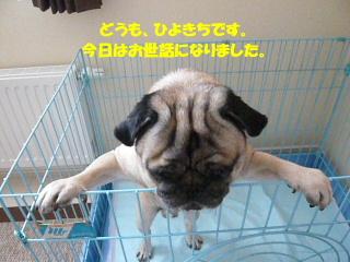 2010_0820hiyokichi0024b.jpg
