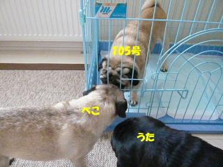 2010_0820hiyokichi0027b.jpg