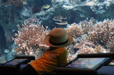 魚に夢中 20100521美ら海水族館