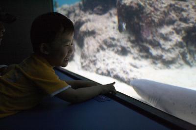 サメさんコンニチハ^^ 20100521美ら海水族館