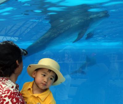 水槽でイルカさんと^^ 20100521美ら海水族館