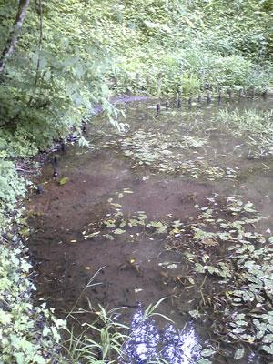 八大龍王のお池