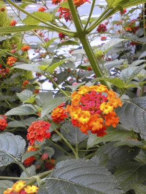 熊本のホテルの花