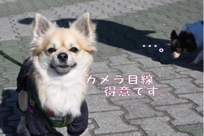コピー (4) ~ inu4