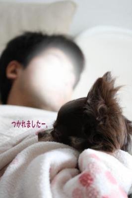 コピー (8) ~ inu4