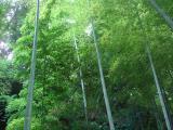 風景 紫陽花寺