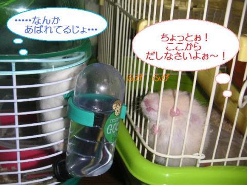 ここ狭いのよ~!