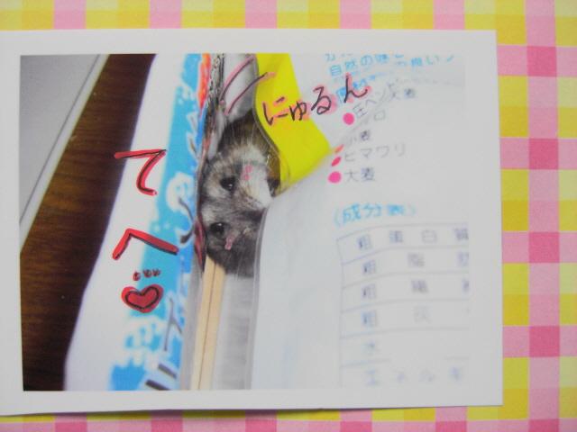 CIMG4222_NEW.jpg