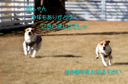 IMG_9741.jpg