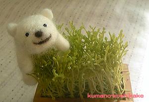 kumanokoshikake-1.jpg
