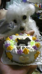 100224蘭丸&ケーキ