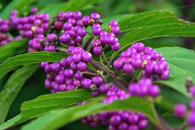小紫(48238 byte)