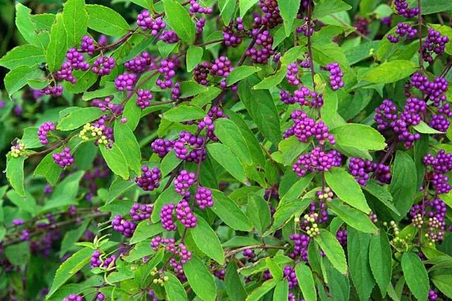 小紫(85643 byte)
