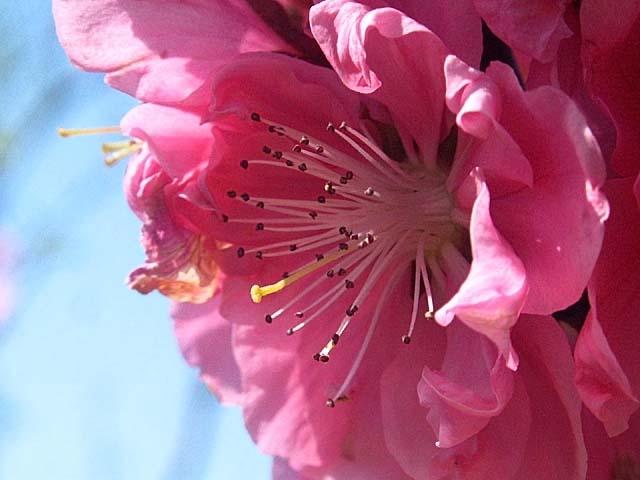 花もも(41464 byte)
