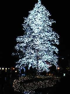 なばなの里クリスマスツリーこっちが本命