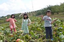 pumpkinpatch2.jpg