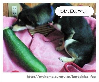 image2787868.jpg