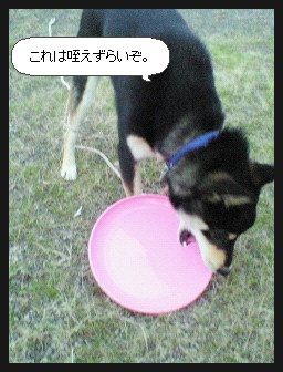 image4337763.jpg